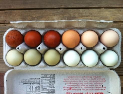 isaac's eggs